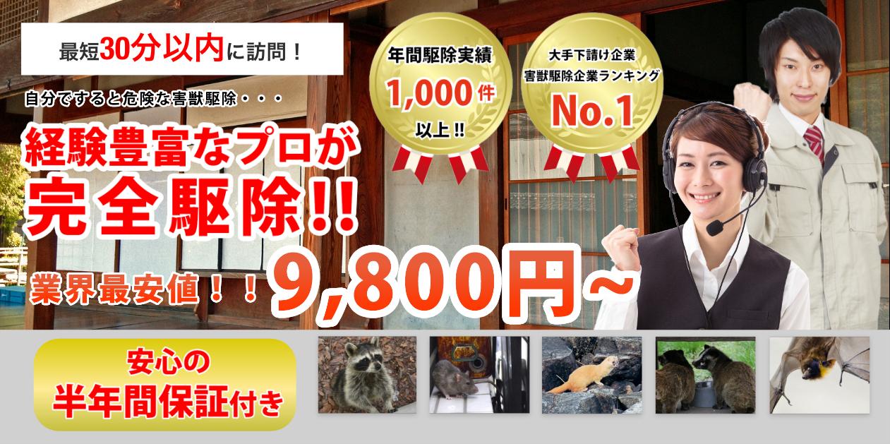 大阪府大東市でのネズミ、イタチなどの害獣被害が急増中です!